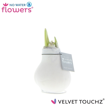 No Water Flowers Velvet Touchz® White