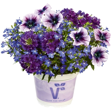 Checkies Caledonia Blue-DeepBlue-Purple