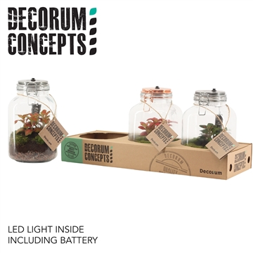 Terrarium Weckpot 3 liter Fittonia mix met lamp (Decorum Concept