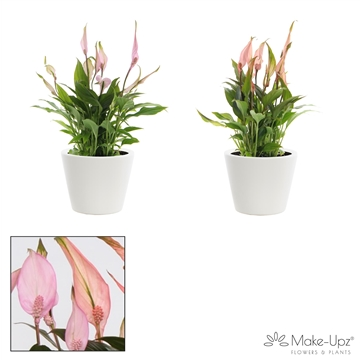 Spathiphyllum 10,5 cm Make Upz Love mix Karla keramiek