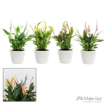 Spathiphyllum 10,5 cm Make Upz Tropical mix Karla keramiek