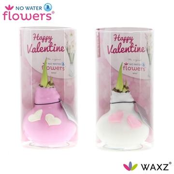 No Water Flowers Waxz® Valentijn roze/wit met hartjes in Koker