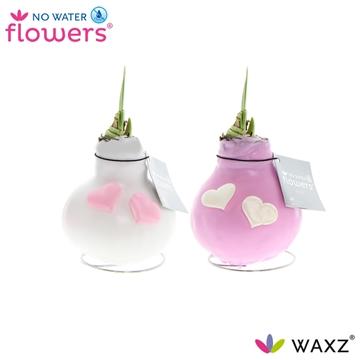 No Water Flowers Waxz® Valentijn roze/wit met hartjes