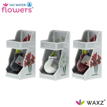 No Water Flowers Waxz® Colorz in Gift Box