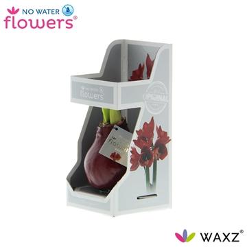No Water Flowers Waxz® Bordeaux in Gift Box