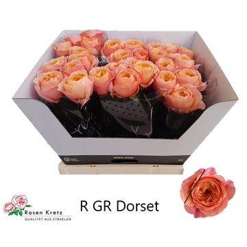 Dorset 60 cm