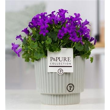 Campanula Porto LL Pure Ivy Ceramics