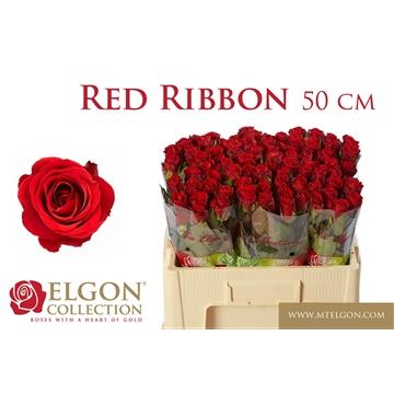 R GR RED RIBBON