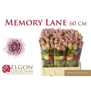 R GR MEMORY LANE