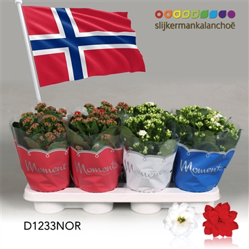Kalanchoë Moments - Norway flag
