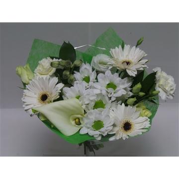 Bouquet Shorties White