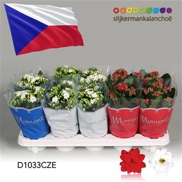 Kalanchoë Moments - Czech Republic flag