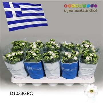 Kalanchoë Moments - Greece flag