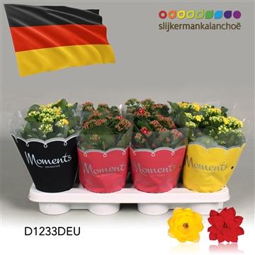 Kalanchoë Moments - Germany flag