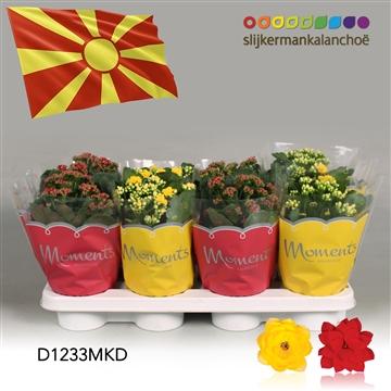 Kalanchoë Moments - North Macedonia flag