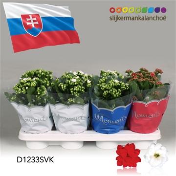 Kalanchoë Moments - Slovakia flag