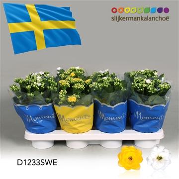 Kalanchoë Moments - Sweden flag