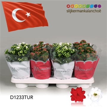 Kalanchoë Moments -  Turkey flag