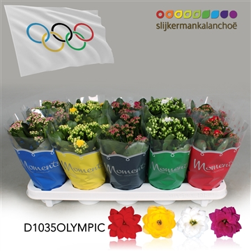 Kalanchoë Moments - Olympic flag