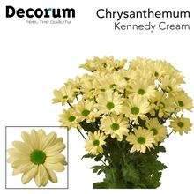 Chry Kennedy Cream