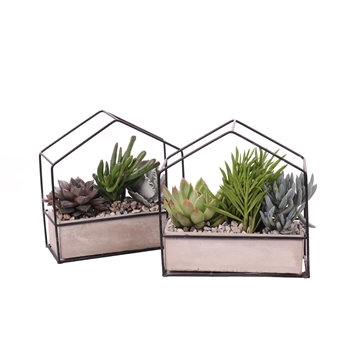 3x succulent metaal huis