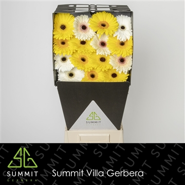GE GR MIXED YELLOW