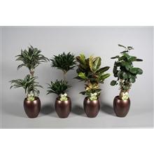 Collectie Alysia - Groene planten mix 3-4 soorten in vaas Talitha (Decorum)