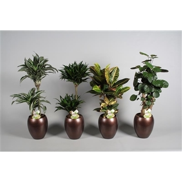 Collectie Alysia - Groene planten mix 3-4 soorten in vaas Talitha (RUSSIA)