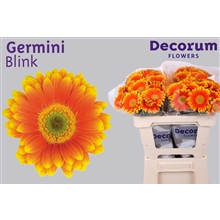 Germini water Blink