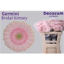 Germini water Bridal Kimsey