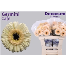 Germini water Cafe