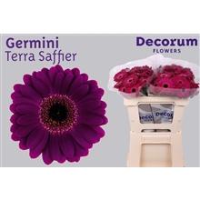 Germini water Terra Saffier