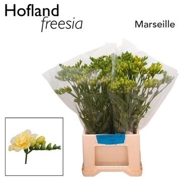 Fr en Marseille