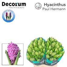 HYAC PAUL HERMANN 2x25.