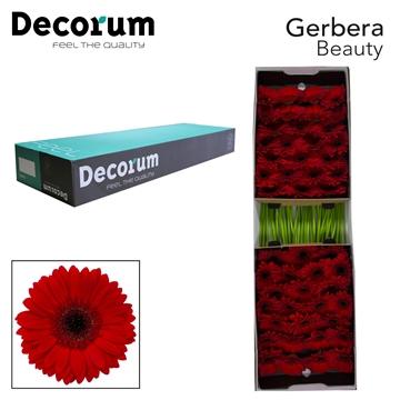 GE GR Beauty Decorum