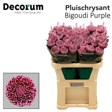 Chr G Bigoudi Purple