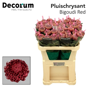Chr G Bigoudi Red