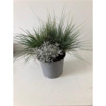 Planten gemengd in pot