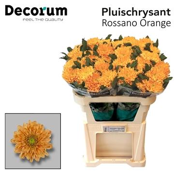 Chr G Rossano Orange