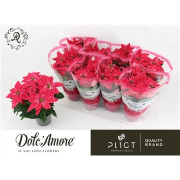 Princettia Glitter P12 Dolc'Amore®
