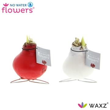 No Water Flowers Waxz® Kolibri mix
