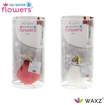 No Water Flowers Waxz® Kolibri mix in koker