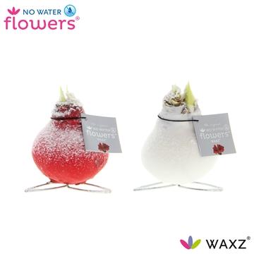 No Water Flowers Waxz® Kolibri Snow mix