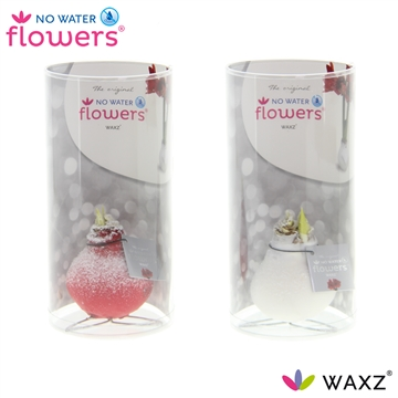 No Water Flowers Waxz® Kolibri Snow mix in koker
