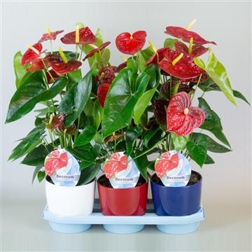 Anthurium Dakota pot 17 keramiek wit/rood/blauw