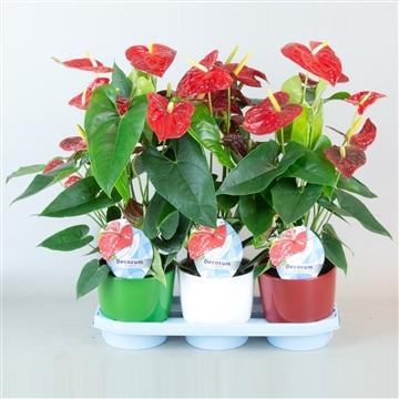 Anthurium Dakota pot 17 keramiek groen/rood/wit