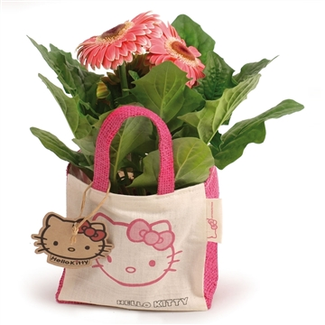 Gerbera Belicht  2+Bl.12cm in Hello Kitty cottontas