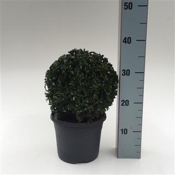 Bol 20-22 cm antraciet pot
