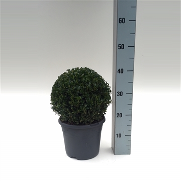 Bol 23-25 cm antraciet pot
