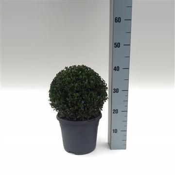 Bol 25-27 cm antraciet pot